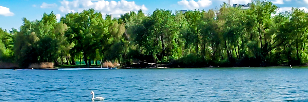 Ufer Schwan